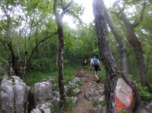 Course d'orientation en forêt